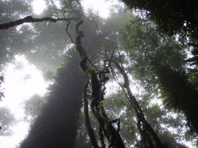 2009 australia 05